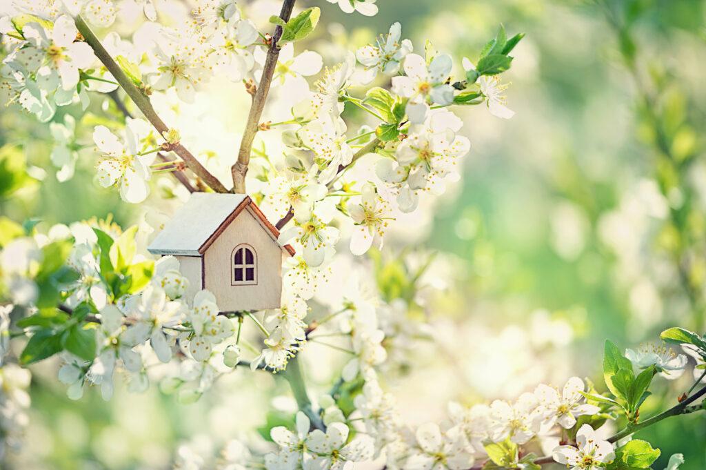 Acheter au printemps par Color Immo